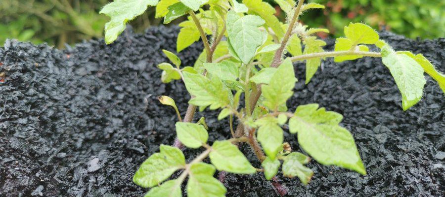 Biochar Supermix Soil